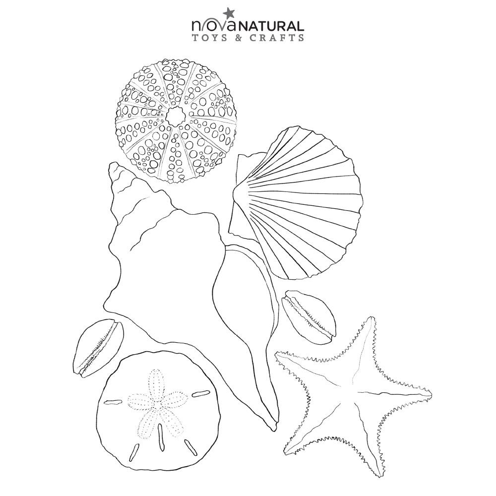 Beach Time Seashell Coloring Sheet