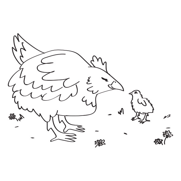 Chicken & Chick Coloring Page